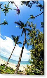 Acrylic Print featuring the photograph Beautiful Palms Of Maui 17 by Micah May