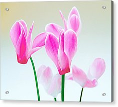 Beautiful Pink Acrylic Print