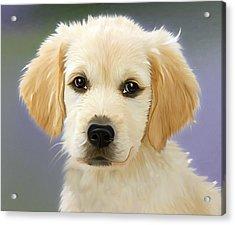 Beautiful Puppy Acrylic Print