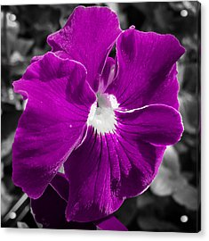 Beautiful Purple Acrylic Print
