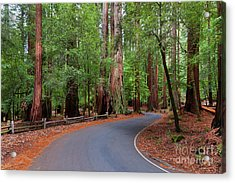 Beautiful Redwood Grove Acrylic Print