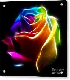 Beautiful Rose Of Colors No2 Acrylic Print