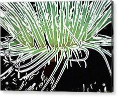 Beautiful Sea Anemone 3 Acrylic Print by Lanjee Chee