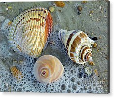 Beautiful Shells In The Surf Acrylic Print