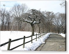 Beautiful Snow Setting Acrylic Print by Dennis Curry