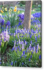 Beautiful Spring Day Acrylic Print by Carol Groenen