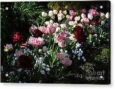 Beautiful Spring Flowers Acrylic Print by Louise Heusinkveld