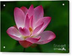 Beautiful Acrylic Print