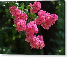 Beautiful Summer Blossoms Acrylic Print