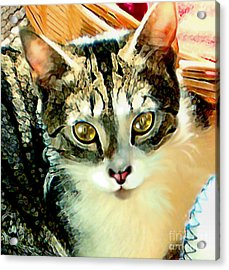 Beautiful Tabby Acrylic Print