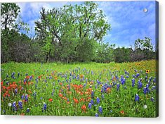 Beautiful Texas Spring Acrylic Print