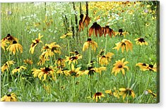Beautiful The Way It Is Acrylic Print by Colleen Williams