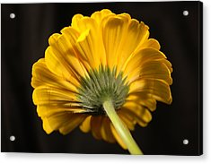 Acrylic Print featuring the photograph Beautiful Underside by Jeff Swan
