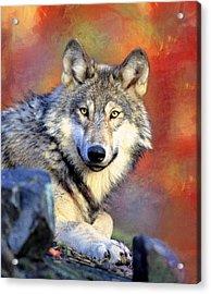 Beautiful Wolf Art Acrylic Print