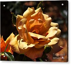 Beautiful Yellow Rose Belle Epoque Acrylic Print by Louise Heusinkveld