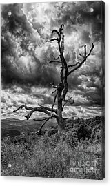 Beautifully Dead In Black And White Acrylic Print