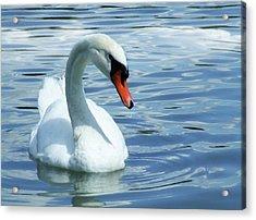 Beautifully Mute Swan Acrylic Print