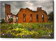 Beauty And Ashes Acrylic Print by Jon Holiday