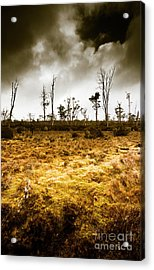 Beauty And Barren Bushland Acrylic Print