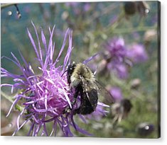 Acrylic Print featuring the photograph Beauty And The Beast by Martha Ayotte