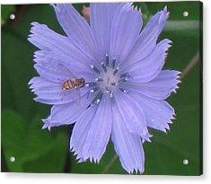 Beauty And The Bee Acrylic Print by Marjorie Tietjen