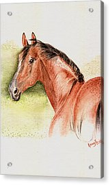Brown Horse From The Wild Acrylic Print by Remy Francis