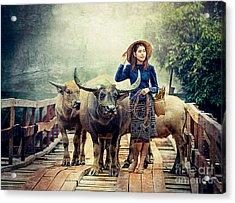 Beauty And The Water Buffalo Acrylic Print by Ian Gledhill