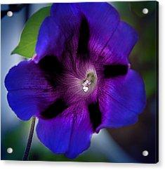 Beauty In Blue Acrylic Print