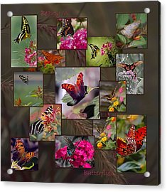 Beauty In Butterflies Acrylic Print by DigiArt Diaries by Vicky B Fuller