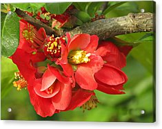 Beauty In The Branche Acrylic Print