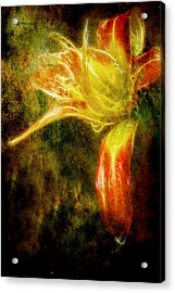 Beauty In The Darkness Acrylic Print