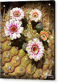 Beauty In The Desert Acrylic Print