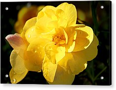 Beauty In Yellow Acrylic Print by Milena Ilieva