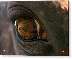 Beauty Is In The Eye Of The Beholder Acrylic Print