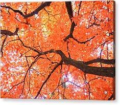 Beauty Of Fall Acrylic Print by Elizabeth