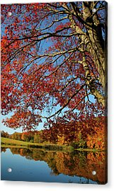 Acrylic Print featuring the photograph Beauty Of Fall by Karol Livote