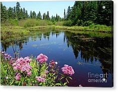 Beauty Of Joe Pye Weeds Acrylic Print