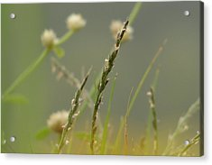Beauty Of Simplicity Acrylic Print