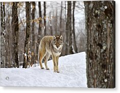 Beauty Of The Woods Acrylic Print
