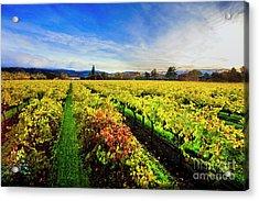 Beauty Over The Vineyard Acrylic Print