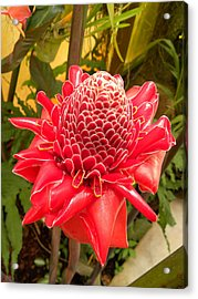 Acrylic Print featuring the photograph Beauty Red by Fanny Diaz