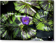 Beauty Rises To The Top Acrylic Print by Dennis Baswell