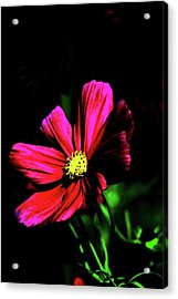 Acrylic Print featuring the photograph Beauty  by Tom Prendergast