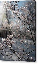 Beauty Within Acrylic Print