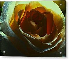 Beauty Within Acrylic Print by Erika Lesnjak-Wenzel