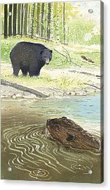 Beaver Acrylic Print by Denny Bond