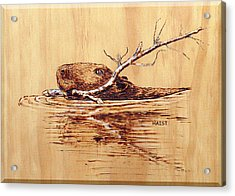 Acrylic Print featuring the pyrography Beaver by Ron Haist