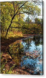 Acrylic Print featuring the photograph Beaver's Pond by Iris Greenwell