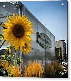 Becca's Sunflower Acrylic Print by Brian Governale