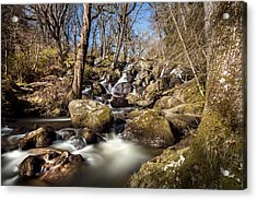 Becky Falls In Spring Acrylic Print by David Hare